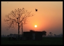 Punjab Sunset_1